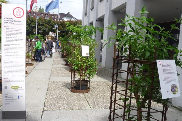 """Kleinausstellung: Exponate """"Exotische Problempflanzen"""""""