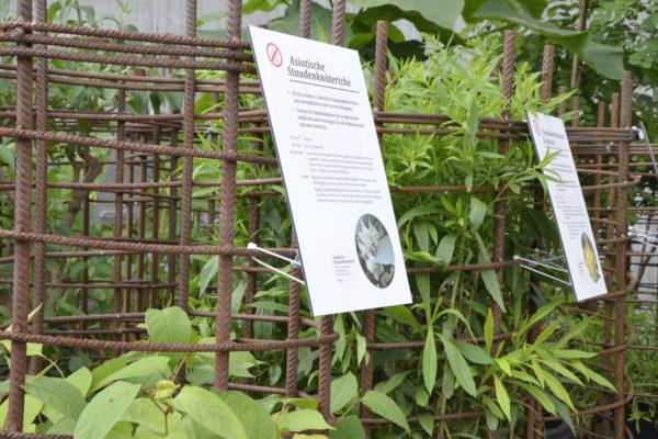 """Exponate """"Exotische Problempflanzen"""" beschriftet"""