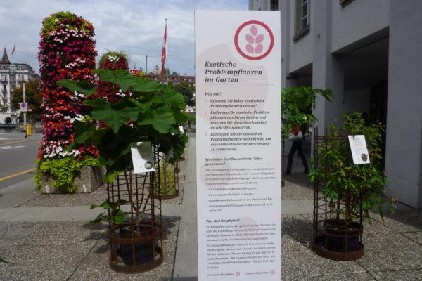 Neophyten Kleinausstellung