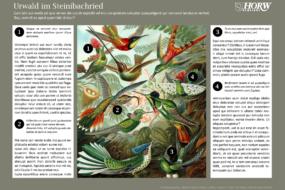 Steinibachried-Tafeln