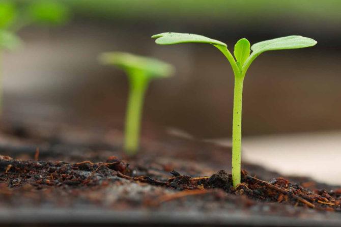 Urban Gardening – frisches Gemüse aus der Stadt
