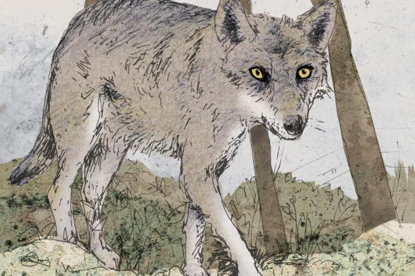 Wolf Medienkoffer