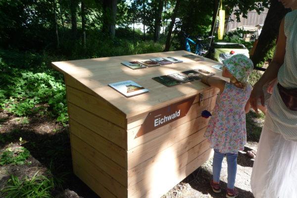 Naturerlebnis Allmend Luzern: Eichwald