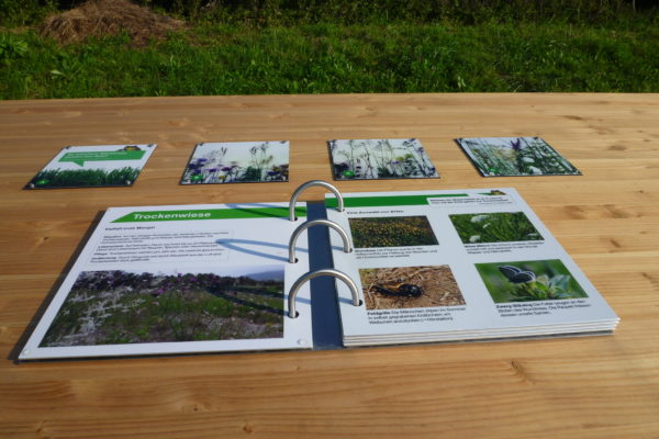 Naturerlebnis Allmend Luzern: Wiesen