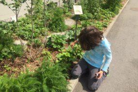 Öffentliche Naschgärten